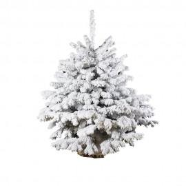 Abete Nordmann floccato bianco -125 cm